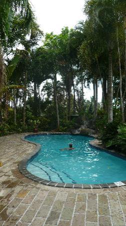 Ambala Garden Lodge: The pool at Ambala Gardens