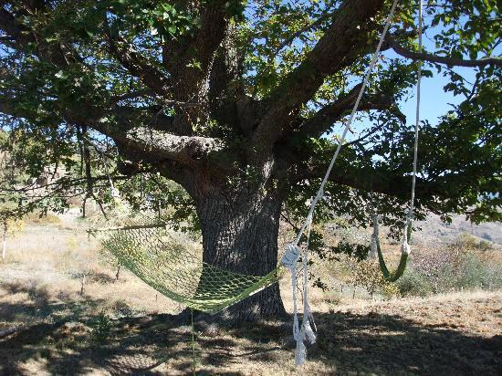 El Cielo de Canar: Relaxing in the hammock