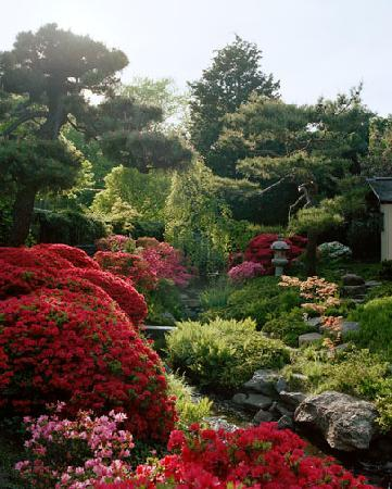 Shofuso Japanese House and Garden: Spring garden in bloom