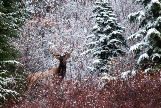 Bilde fra Mount Rainier National Park