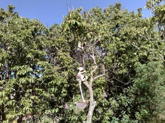 Antananarivo Aufnahme