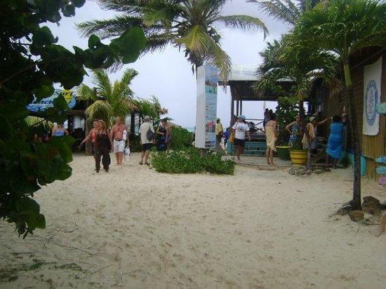 Discover Bonaire