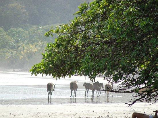 Foto Playa Samara