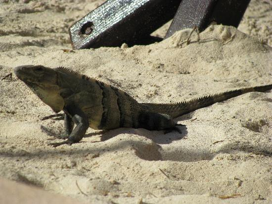 El Cozumeleno Beach Resort: Our pet Jorge outside room 1118