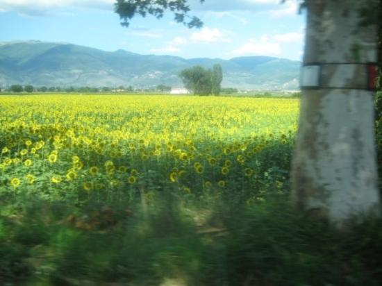 Spoleto Photo