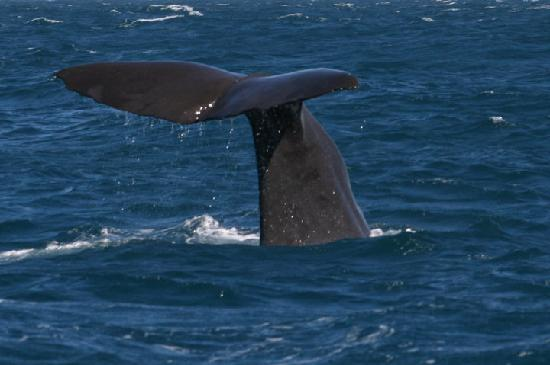 Kaikoura, New Zealand: Whale Tail