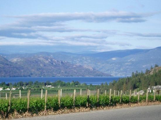 West Kelowna, Καναδάς: kelowna, british columbia