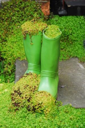 Cork, Irlande : Il pleut tellement que l'herbe pousse dans les bottes.. Kinsale