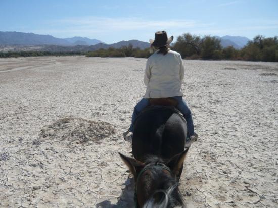 Death Valley National Park, CA: Death Valley mit Gipsy (Pferd)