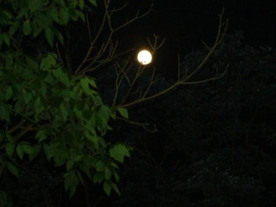 ANOTHER SHOT OF FULL MOON THROUGH THE TREES ON POND CREEK RD. IN BELLEVILLE, WV--JULY 2009