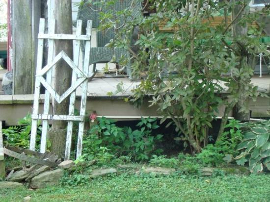 Belleville, WV: OLD TRELLIS SCENE THAT CAUGHT MY EYE AT VALS---9/09