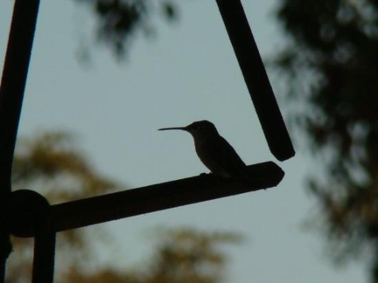 HUMMINGBIRD AT REST ON TRIANGLE ON VALS PORCH IN BELLEVILLE, WV---9/09