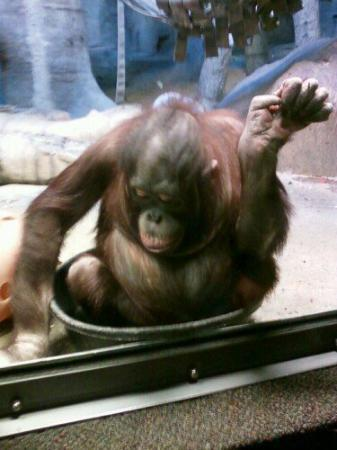 Henry Doorly Zoo: The coolest monkey ever!