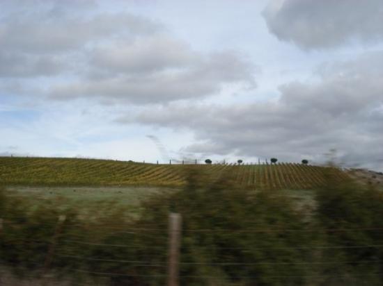 Napa, CA: viñedos...