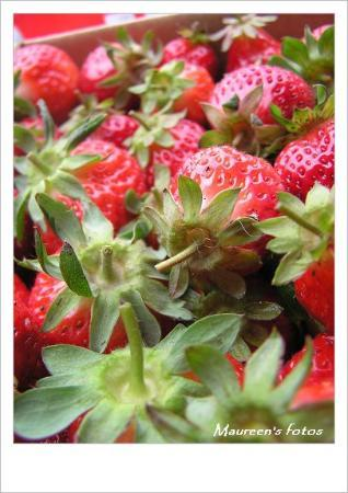 Miaoli County, Taiwan: Happy strawberry farm. (C750UZ)