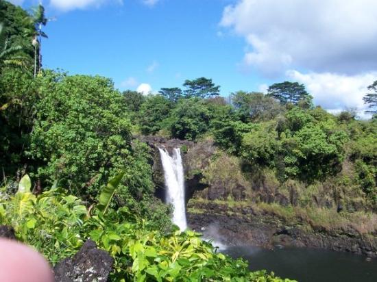 Picture of rainbow falls hilo tripadvisor for Hilo fish company