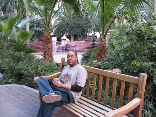Flamingo Las Vegas Hotel & Casino: Vegas