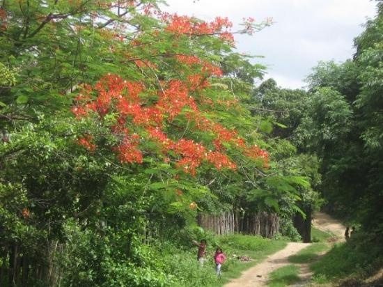 Ocotal, Nicaragua: This is a beautiful tree that they have there.