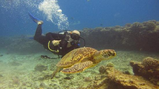 Oahu Diving: Diving with a sea turtle.