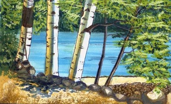 Indian Lake, État de New York : Birches by the lake