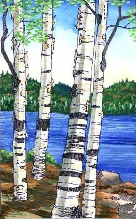 Indian Lake, État de New York : Birches on the lake