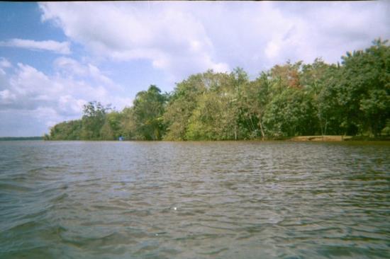 Belem, PA: pretty jungle