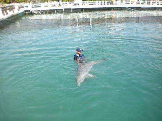 Dolphin Discovery Puerto Aventuras: she had a baby
