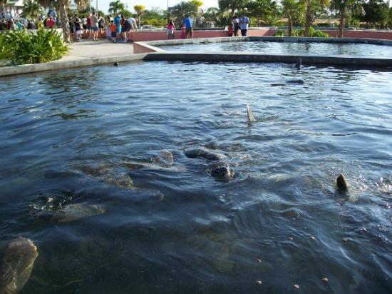 Bilde fra Grand Cayman