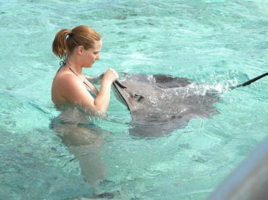Bora Bora, Fransk Polynesia: playing with the sting ray