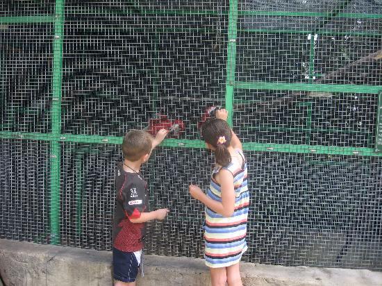 Ashmore Palms Holiday Village: Feeding the macaws