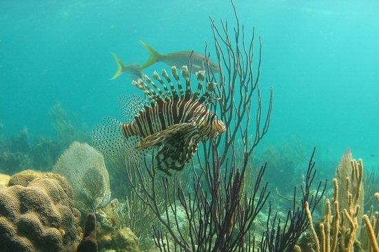 Bahama Divers: Lionfish