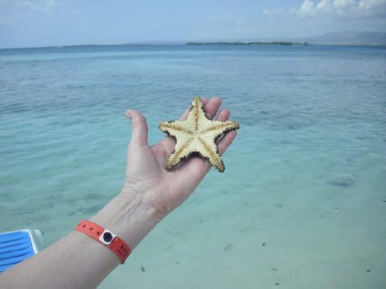 Club Amigo Marea del Portillo: Starfish