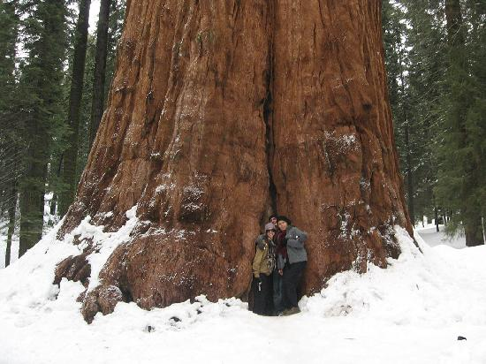 Sequoia Village Inn: General Sherman Tree