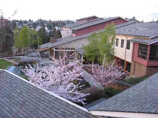 Cedarbrook Lodge: looking towards back of lodge with cherry blossoms