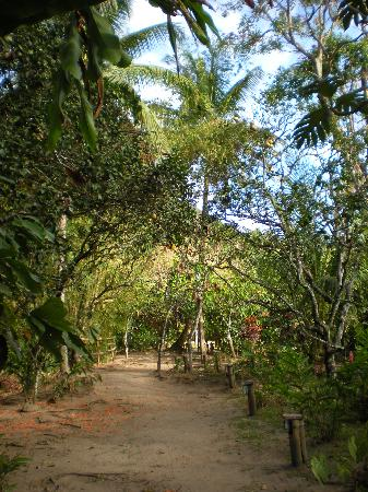 Fond Doux Plantation & Resort: pathway to cottages