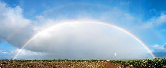 Maui Tradewinds: Pesky rainbows keep cropping up.