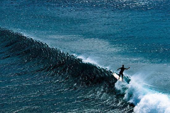 Maui Tradewinds: Basic Beach Denizen