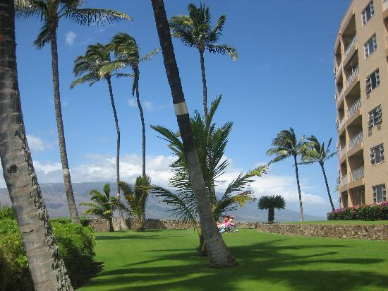 Menehune Shores: the lawn outside our condo