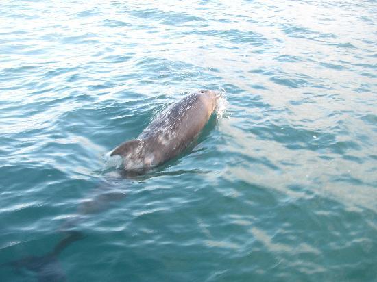 Captain Na Pali Adventures, Inc.: Bottlenose Dolphin