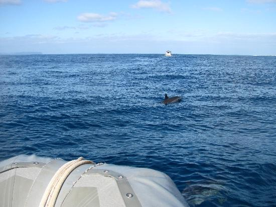 Captain Na Pali Adventures, Inc.: There were about 35-40 Spinner dolphins that played around the boat