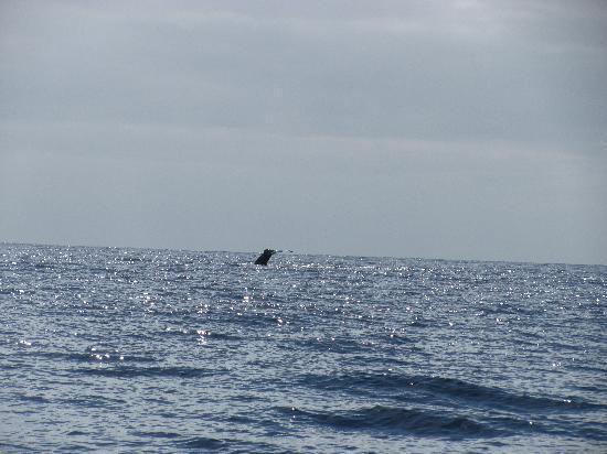 Captain Na Pali Adventures, Inc.: Humpback Whale