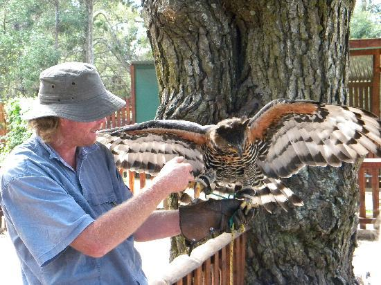 Radical Raptors: Dennis Robson with one of the birds of prey