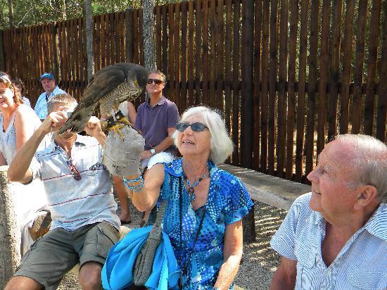 Radical Raptors: Birds sit on your gloved hand
