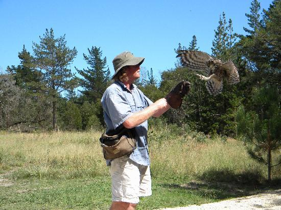 Radical Raptors: An owl about to land