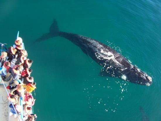Puerto Madryn, Argentina: terrible ballenato.. si sigo comiendo la alcanzo jaja