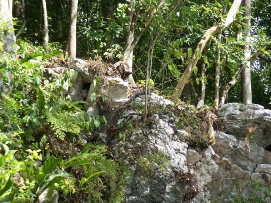 Bilde fra Belize by