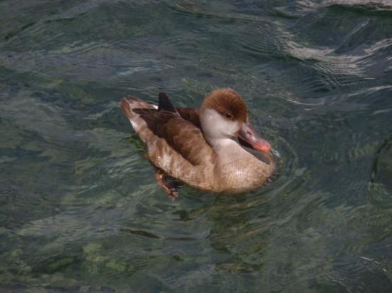 Bilde fra Lake Luzern