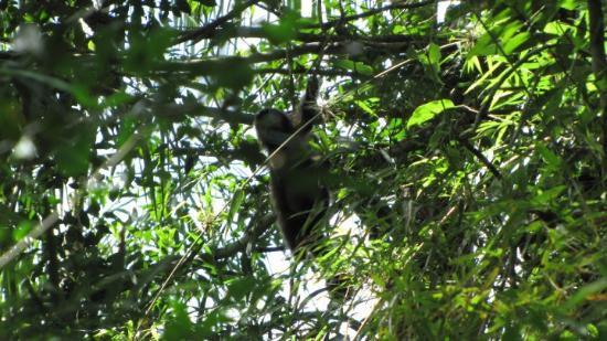 Puerto Iguazu, Argentina: Blurry monkey