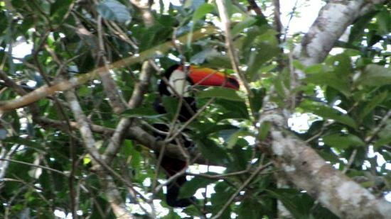 Puerto Iguazu, Argentina: As close to the tucan as we could get