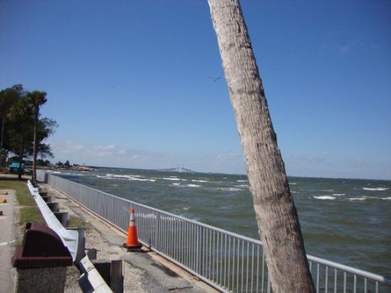 Bilde fra Tampa